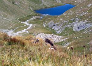 Le lac Foréant à Ristolas (Queyras, Hautes Alpes)