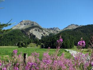 Côte Belle avec à sa droite, la Crête des Oules puis le pic de Rochebrune (Arvieux)