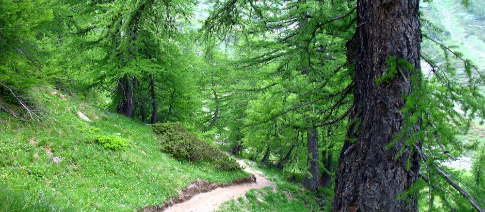Un sous-bois dans le Parc naturel du Queyras