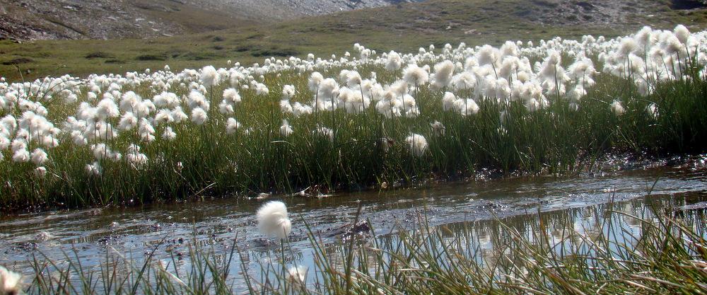 Une sagne (un marais) dans le Parc naturel du Queyras