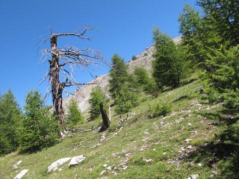 Ein Berghang im Queyras (Hochalpen)