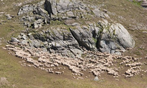 Quelques moutons dans le vallon de Péas (Château-Ville-Vieille))