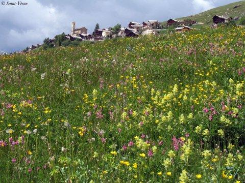 Saint-Véran dans les Hautes Alpes, plus haute commune d'Europe