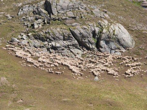 Roches moutonnées dans le vallon de Péas (Chateau-Ville-Vieille, Queyras)