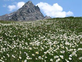Le Bric Bouchet, montagne d'Abriès dans le Queyras à la frontière italienne