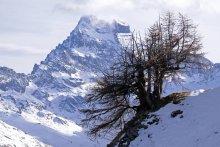 Mont Viso vu depuis les hauteurs de Ristolas (Queyras - Hautes Alpes)
