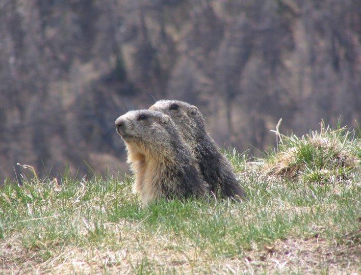 Eveil de la nature avec nos amies les marmottes